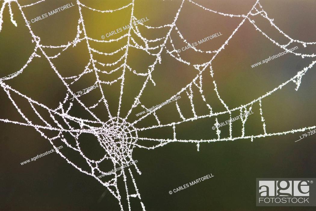Stock Photo: Spiderweb.