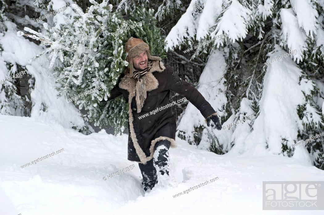 Stock Photo: Austria, Salzburg County, Mature man carrying christmas tree, smiling.