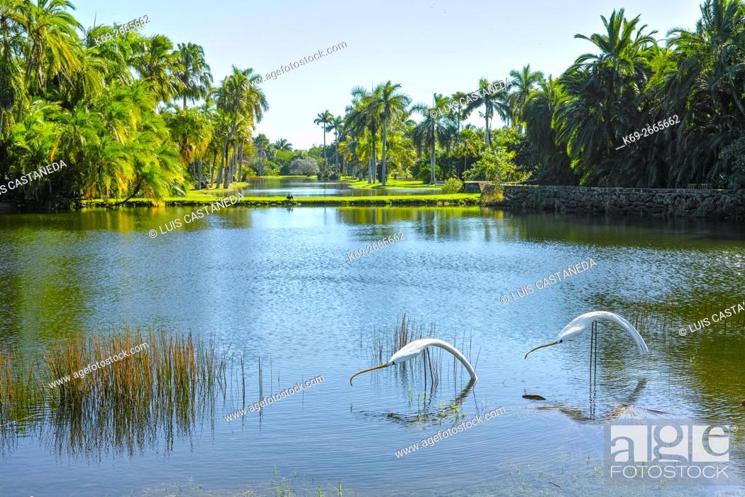 Stock Photo: Fairchild Tropical Gardens. Florida. USA.