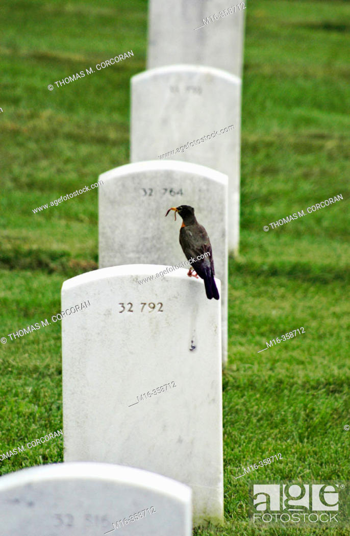 Stock Photo: Bird with worm on grave.