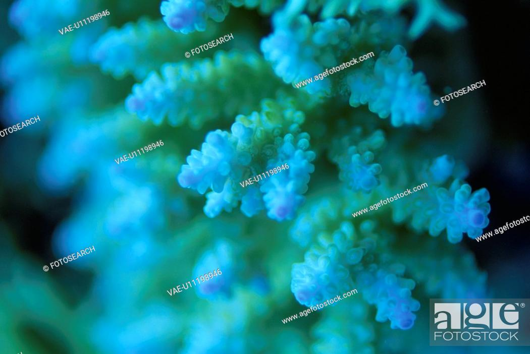 Stock Photo: Coral.