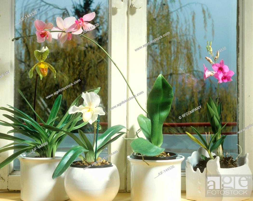 Stock Photo: different orchids in front of the window.