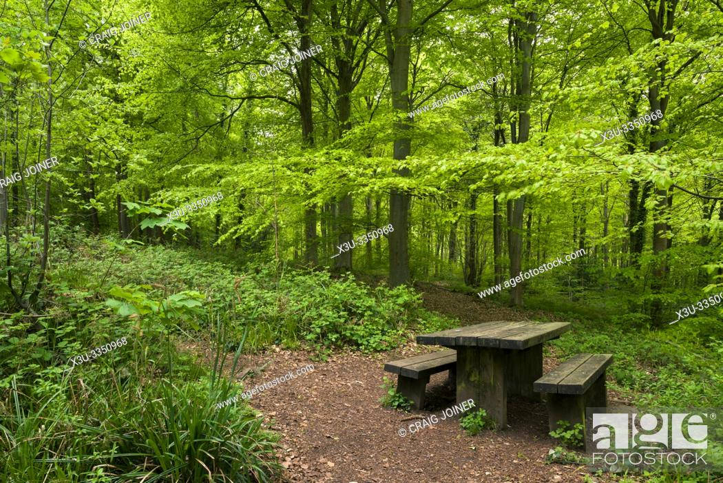 Stock Photo: A picnic table in Leigh Woods near Bristol, North Somerset, England.