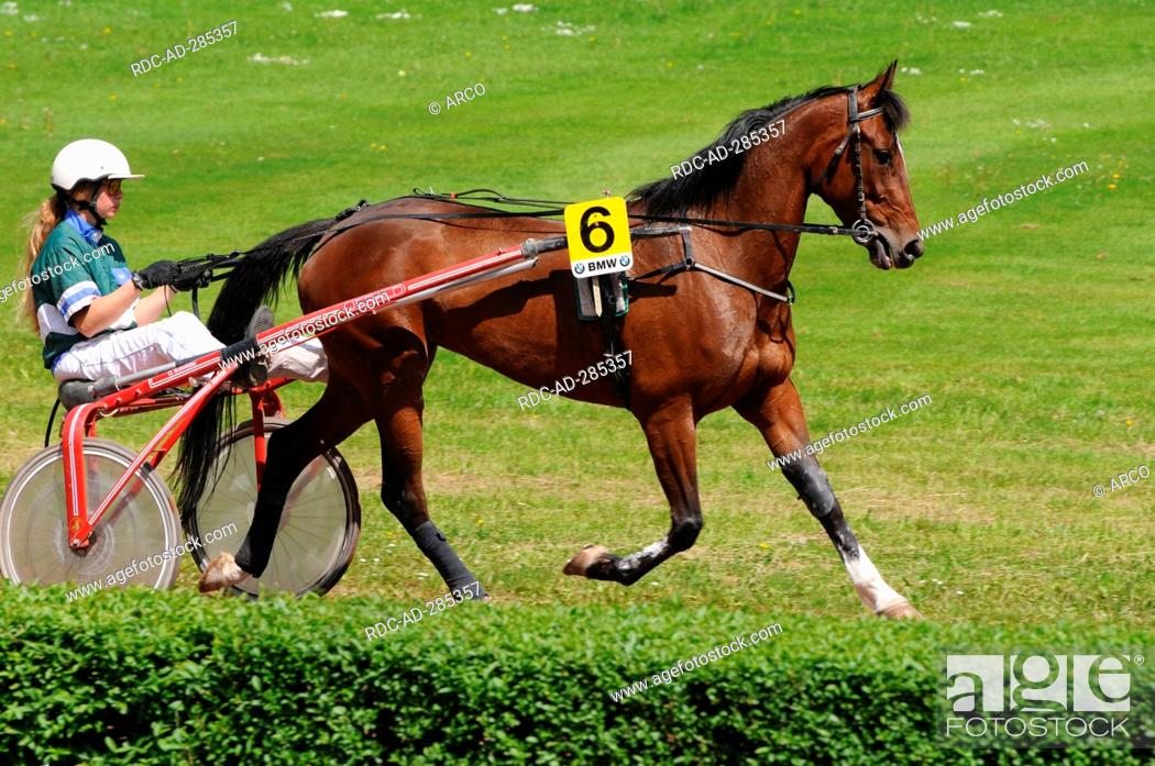 Harness racing / Standardbred, Trotter, sulky, driver, harness