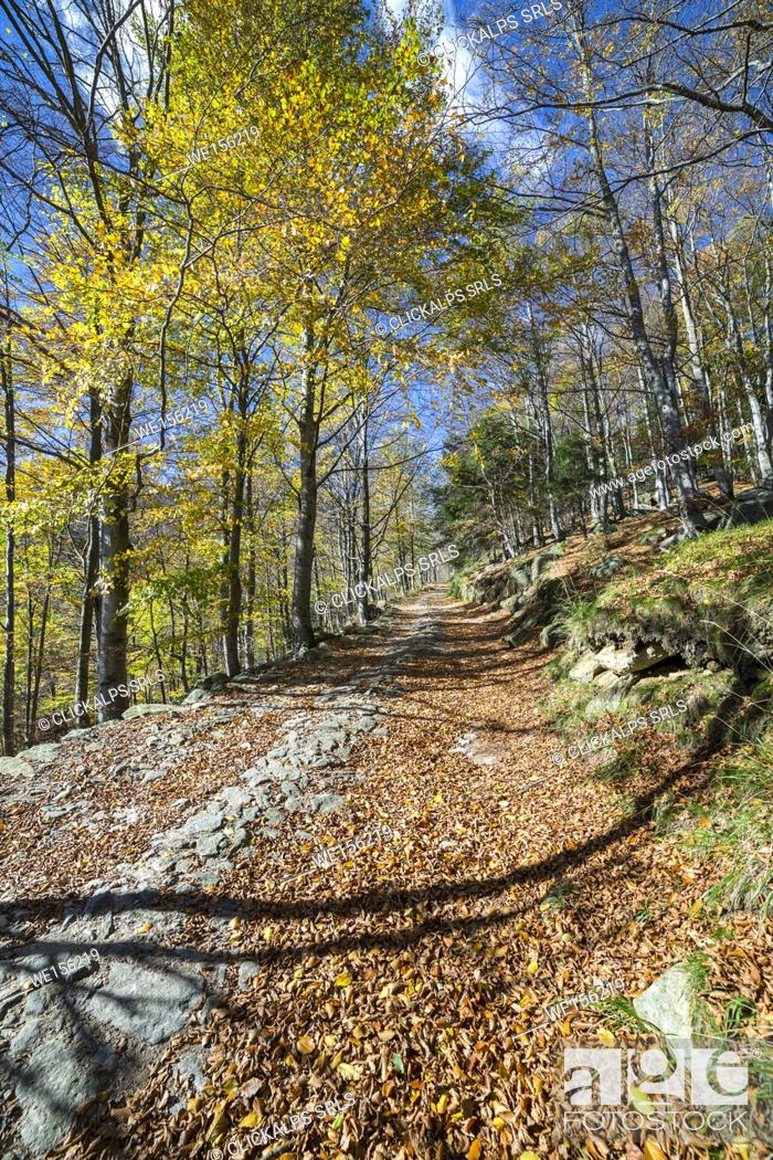 Photo de stock: Dirt trail in the forest of beeches in autumn (Oropa Valley, Biella province, Piedmont, Italy, Europe).