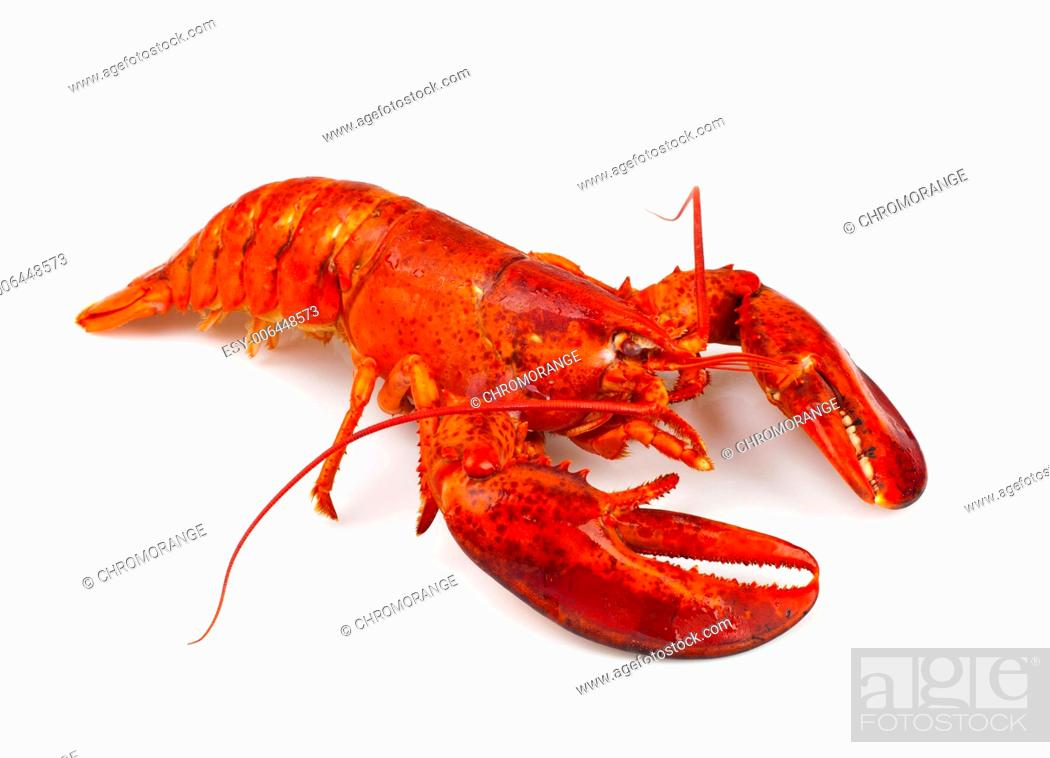 Stock Photo: Red lobster isolated on white background.