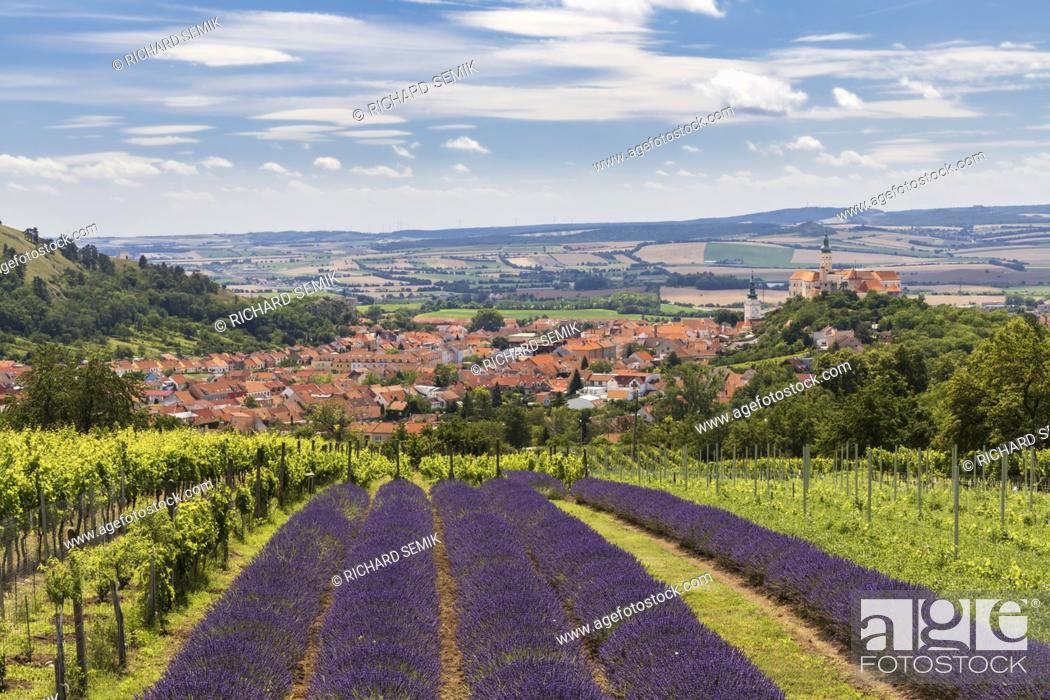 Imagen: South Moravian town of Mikulov with the lavender field in Czech Republic.