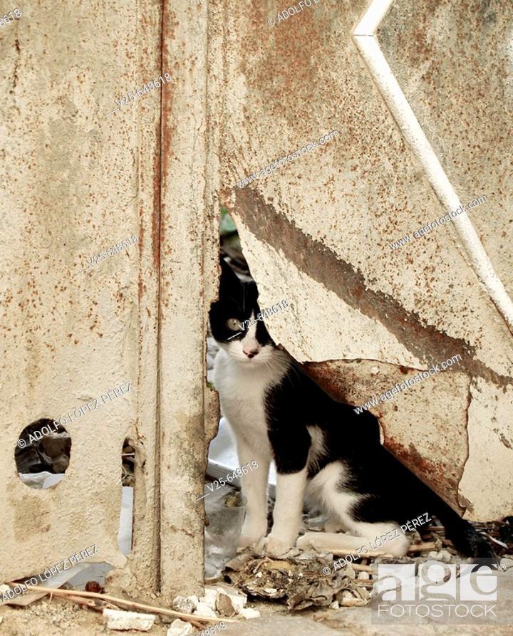 Stock Photo: Hidden cat behind broken door in Granada. Spain.