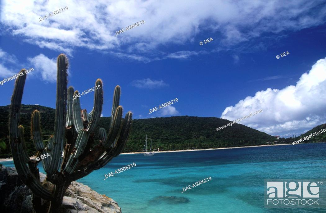 Stock Photo: British Virgin Islands (British colony) - Peter Island - Cactus (Cactaceae) in the sea.
