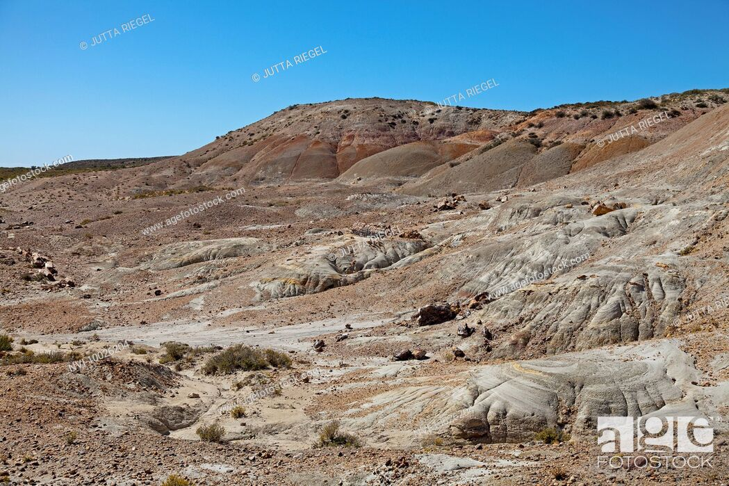 Stock Photo: Area of petrified trees at Bahia Bustamante, Province of Chubut, Patagonia, Argentina, South America.