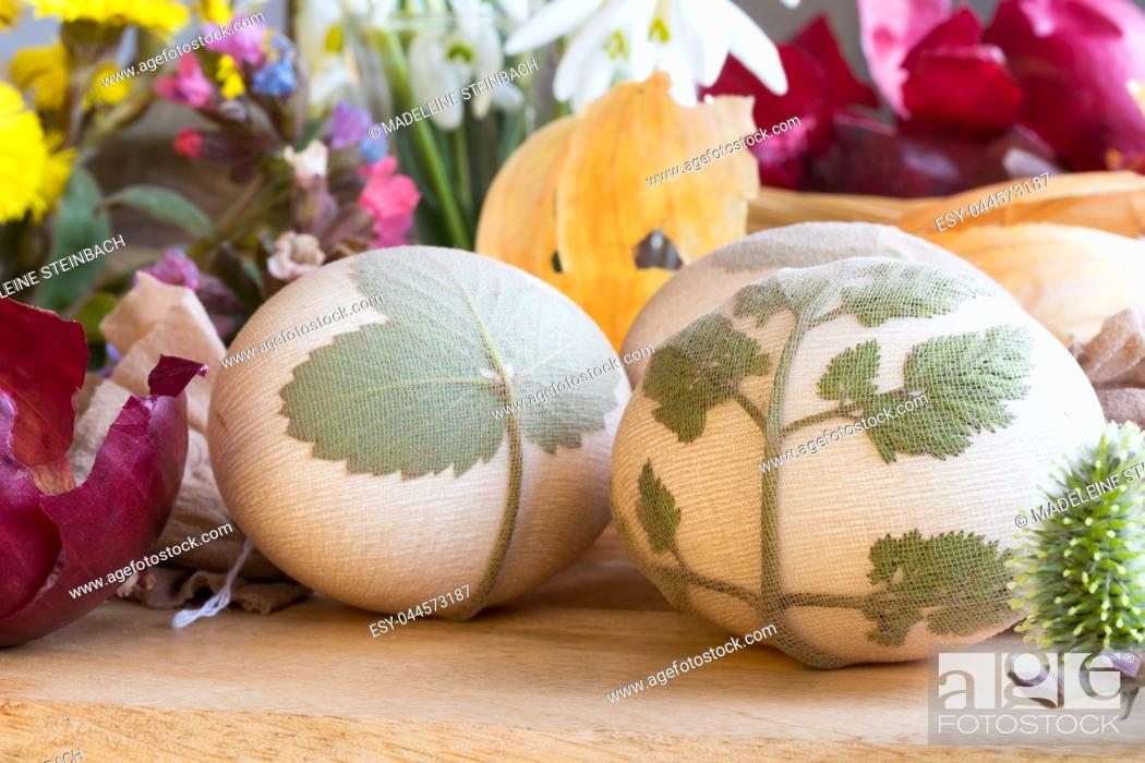 Stock Photo: Preparation of Easter eggs for dying with onion peels: eggs with a pattern of fresh herbs, onion peels, coltsfoot, lungwort and snowdrop flowers in the.