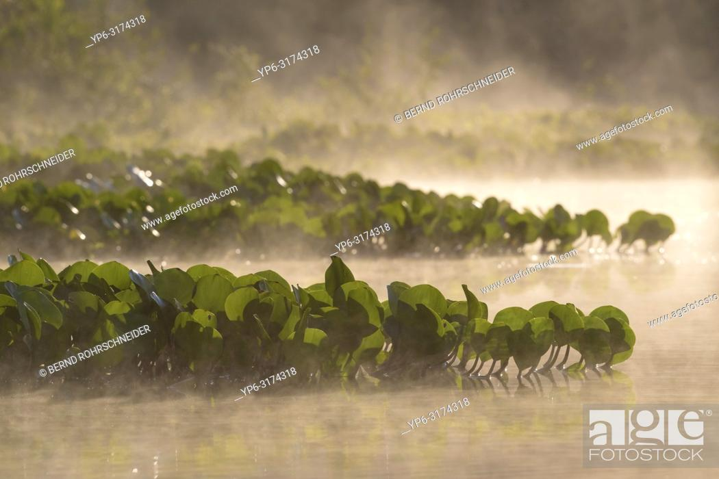 Stock Photo: river with water plants and fog, Rio Claro, Pantanal, Mato Grosso, Brazil.