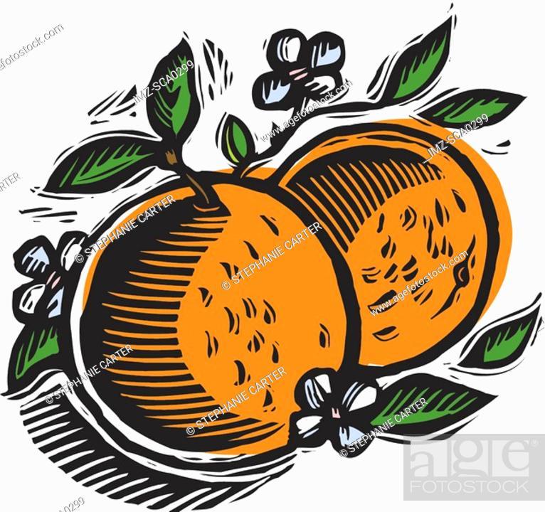 Stock Photo: two fresh oranges.