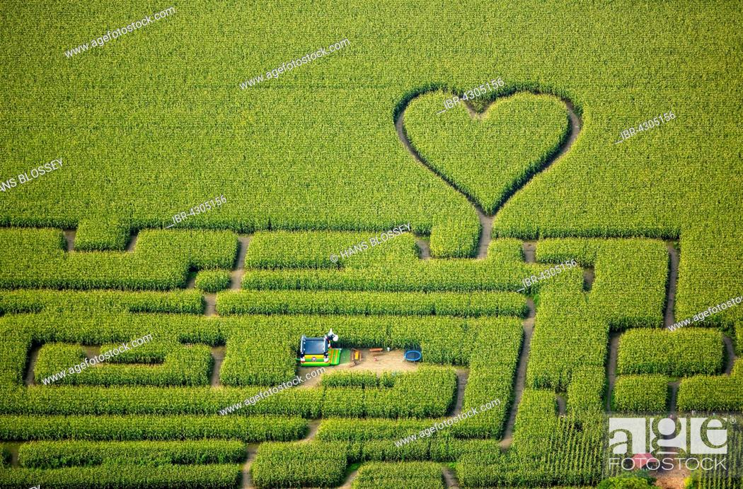 Stock Photo: Labyrinth with a heart in the cornfield, corn maze, green heart, heart shape, heart shaped, Herten, Ruhr district, North Rhine-Westphalia, Germany.