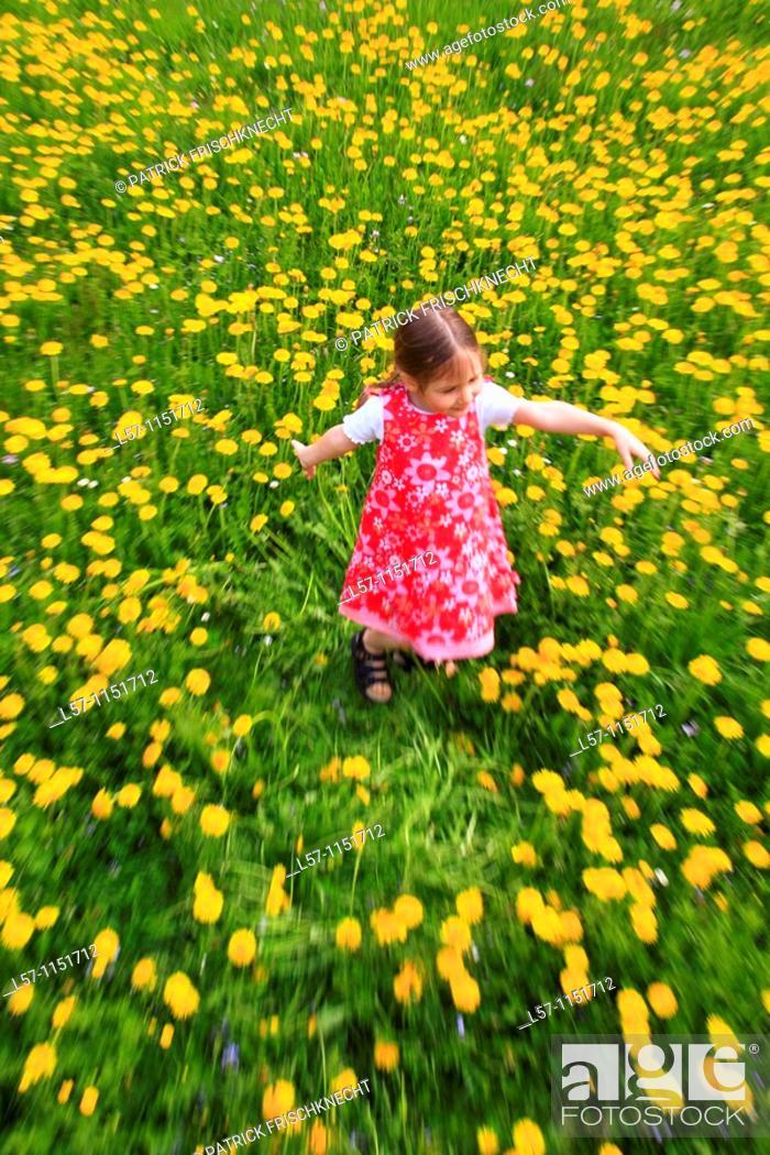 Stock Photo: girl playing in field of Dandelions, Zuercher Oberland, Zuerich, Switzerland.