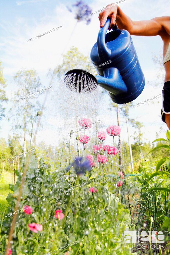 Stock Photo: Woman watering flowers in garden, Norrbotten, Sweden.