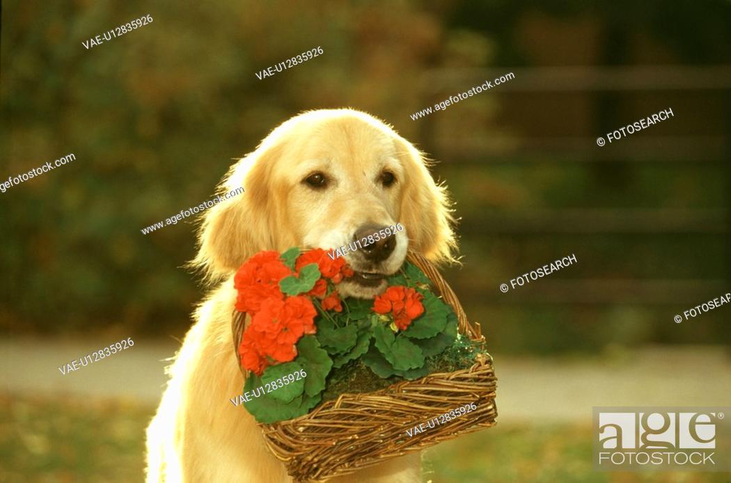Stock Photo: Dog.