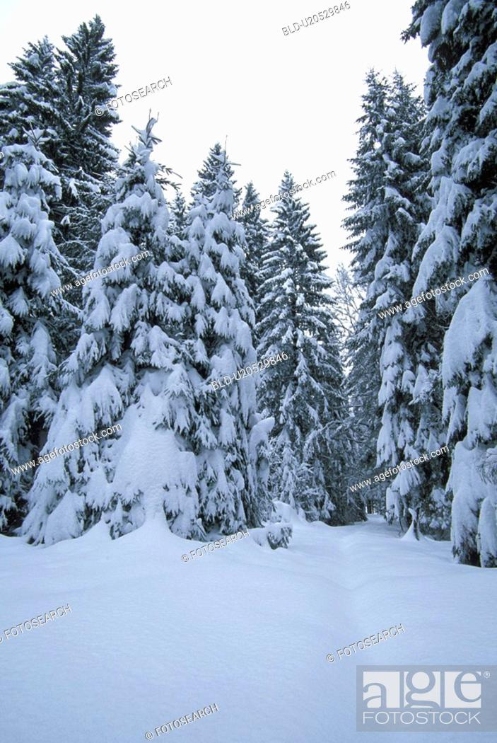 Stock Photo: Christian, conifer, cold, abandoned.