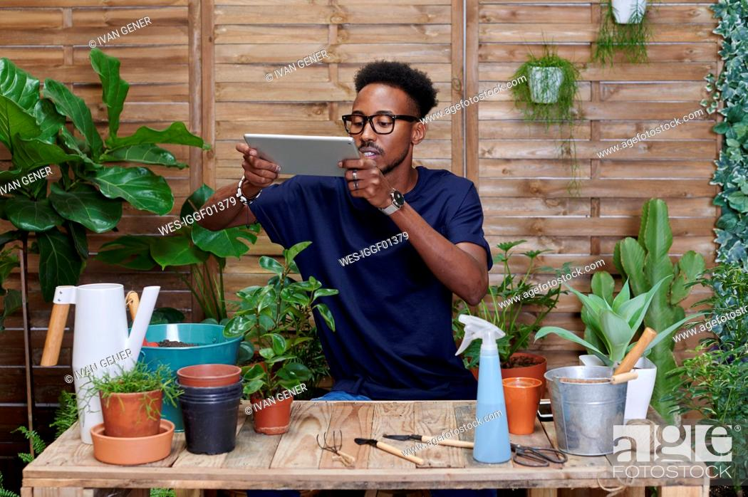 Stock Photo: Young man using digital tablet on his terrace while gardening.