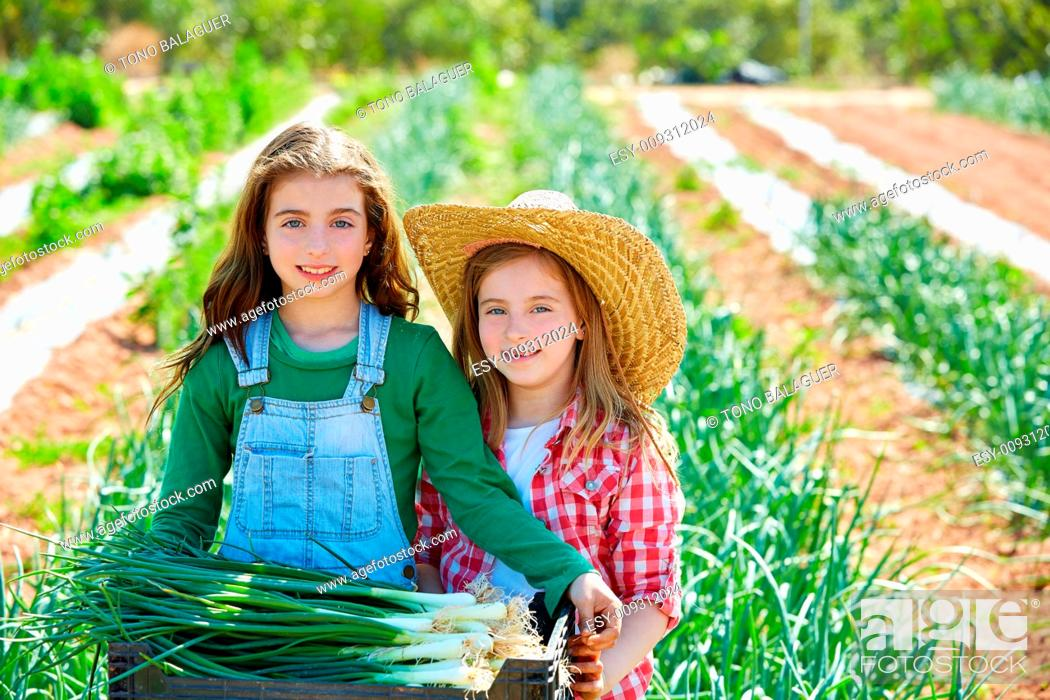 Stock Photo: Litte kid farmer girls in onion harvest at orchard.