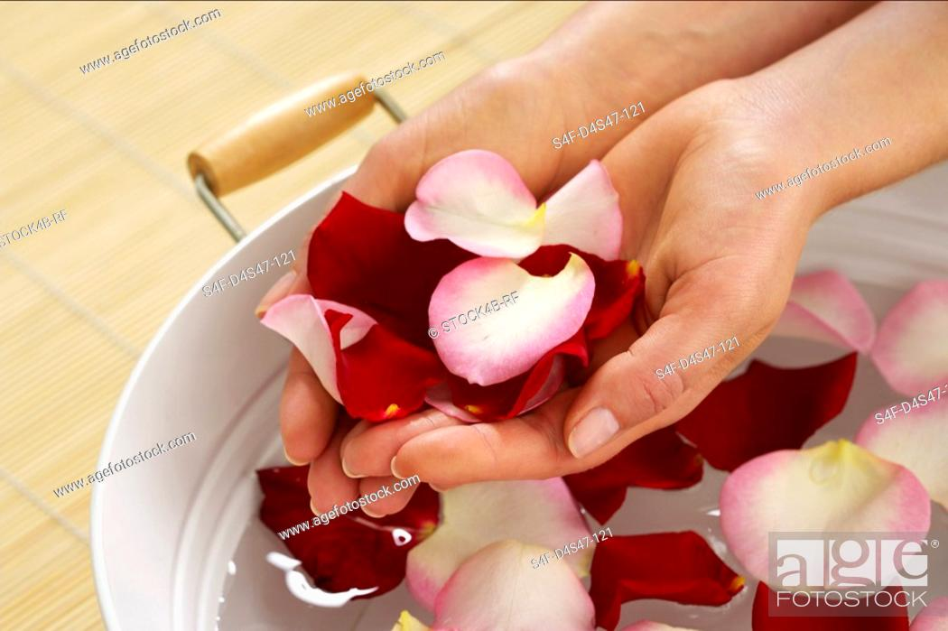 Stock Photo: Woman holding rose petals in palms of hands.