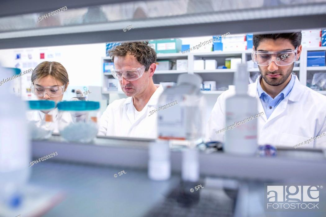 Stock Photo: Lab assistants working in lab.