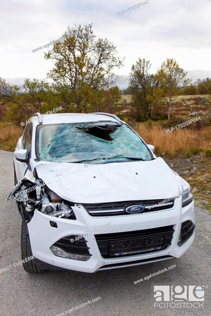 Stock Photo: Wrecked car after collision with moose (Alces alces) on road in Scandinavia.
