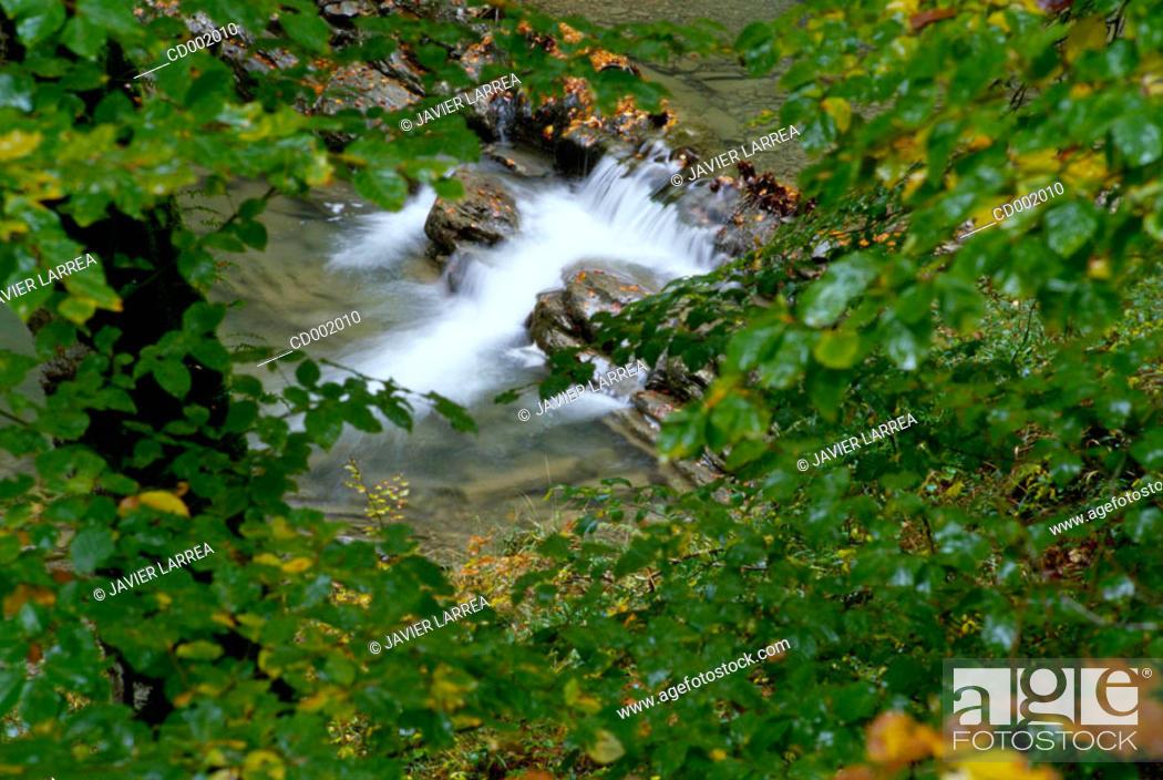 Stock Photo: Irati River. Irati Forest. Navarre. Spain.