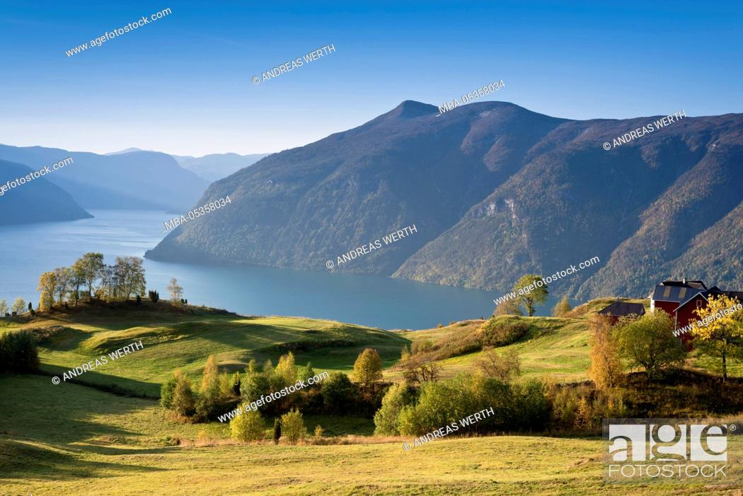 Imagen: View over meadows and trees towards the Lustrafjord, the inner branch of the Sognefjord, Lustrafjord, Sogn og Fjordane, Norway, Europe.