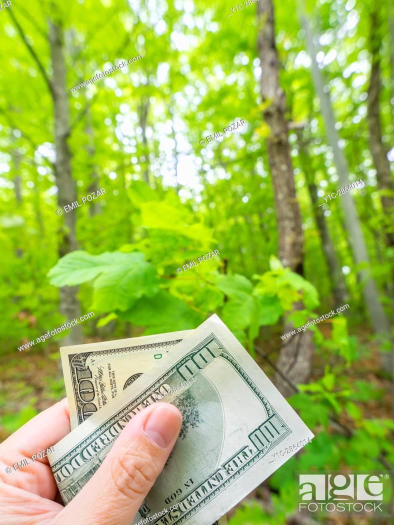 Stock Photo: Money dollars in hand before nature.