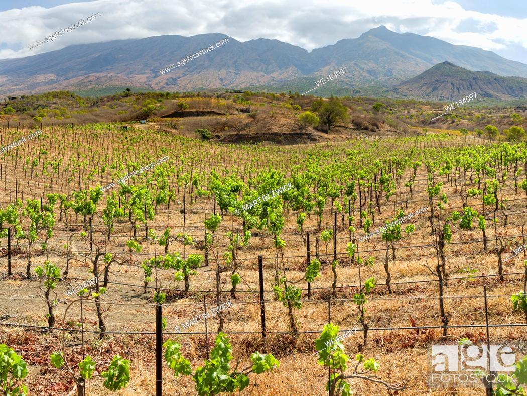 Imagen: Modern viniculture at winery Maria Chaves. Fogo Island (Ilha do Fogo), part of Cape Verde in the central atlantic.