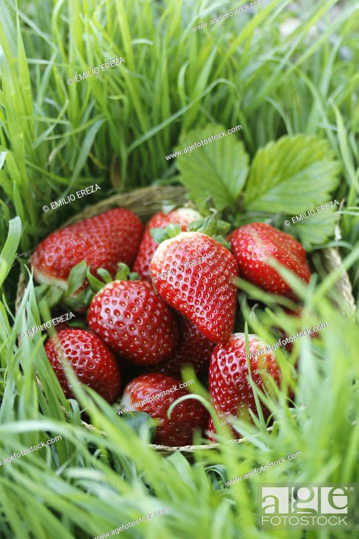 Stock Photo: Fresh strawberries.
