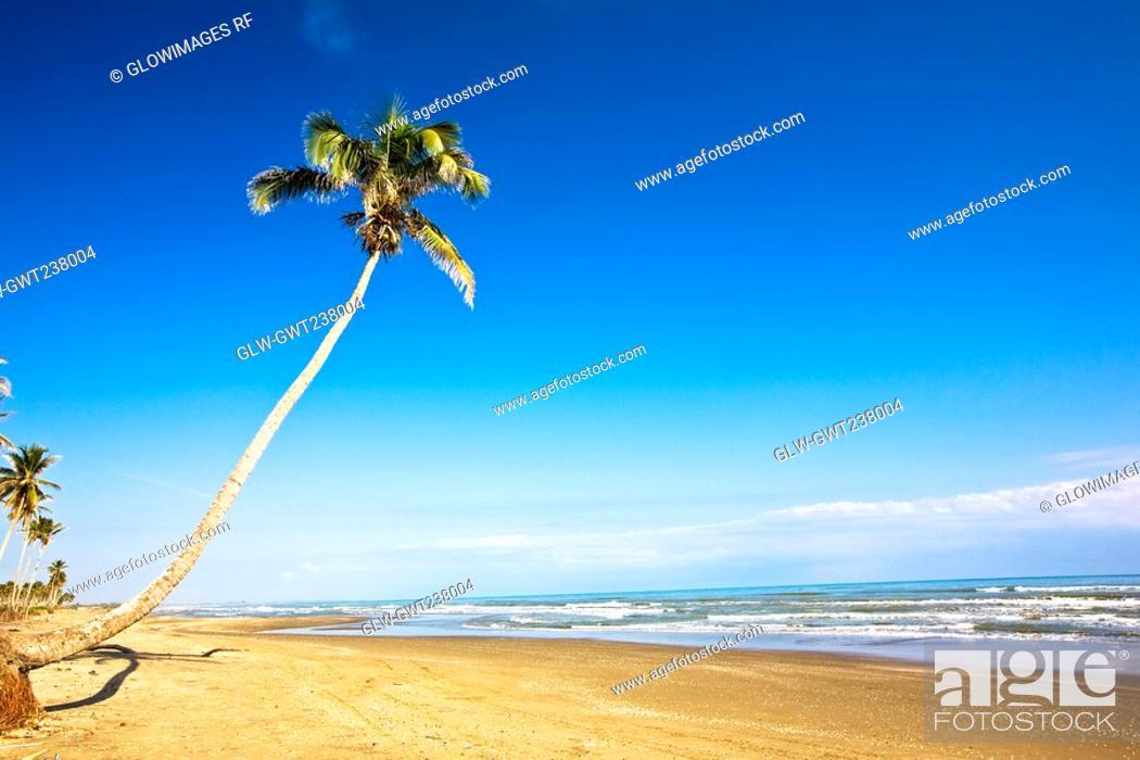 Stock Photo: Palm tree on the beach, Ranch Beach, Papantla, Veracruz, Mexico.