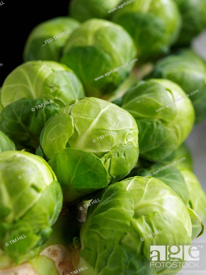 Imagen: Brussels sprouts tree.