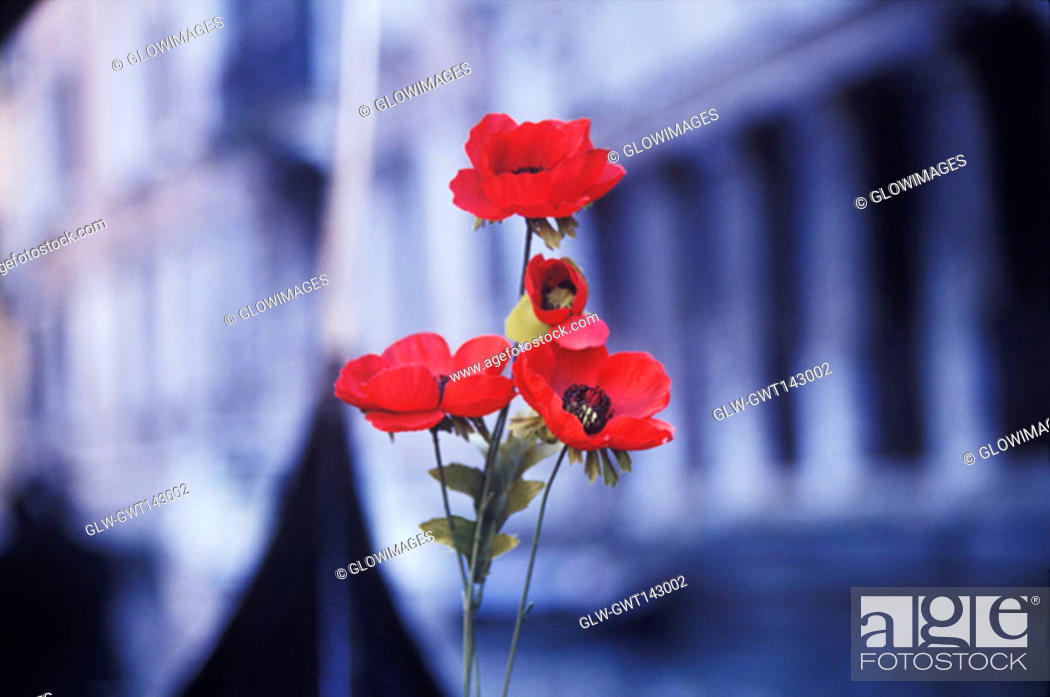 Stock Photo: Close-up of a red flowers in front of a building, Italy.
