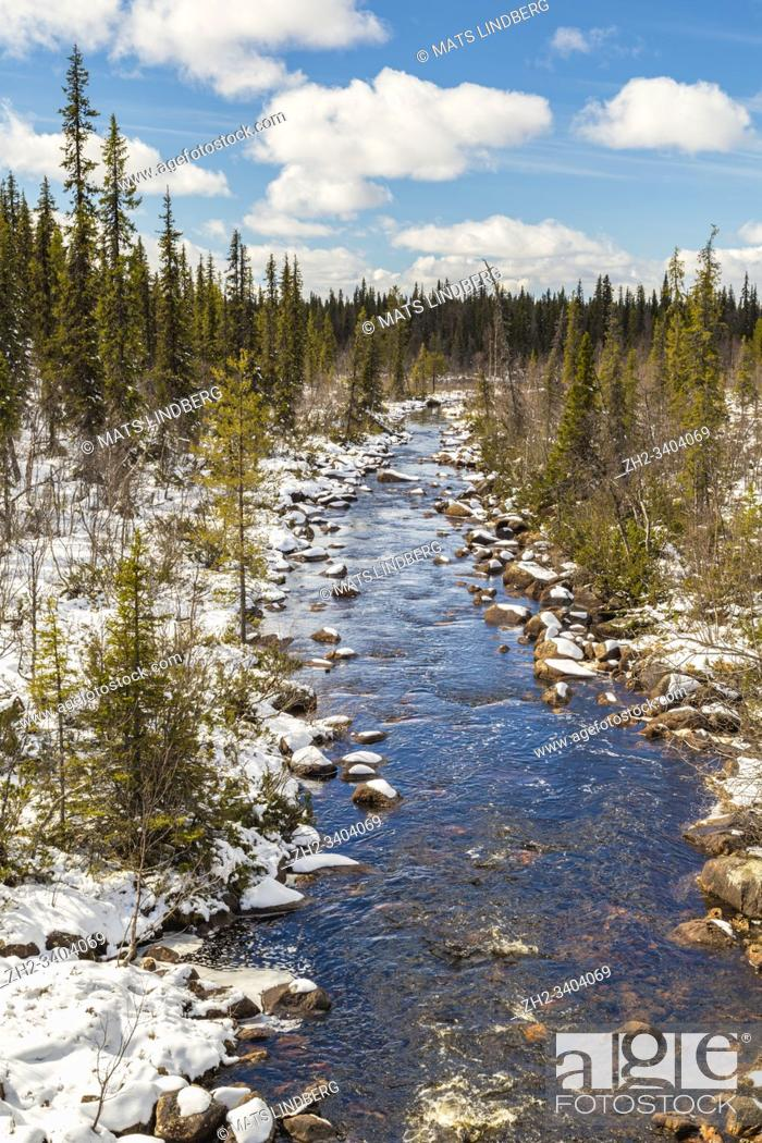Stock Photo: Muddus jokk in springtime with running water, snow on the side, spruce and birch trees around, Gällivare county, Swedish Lapland, Sweden.