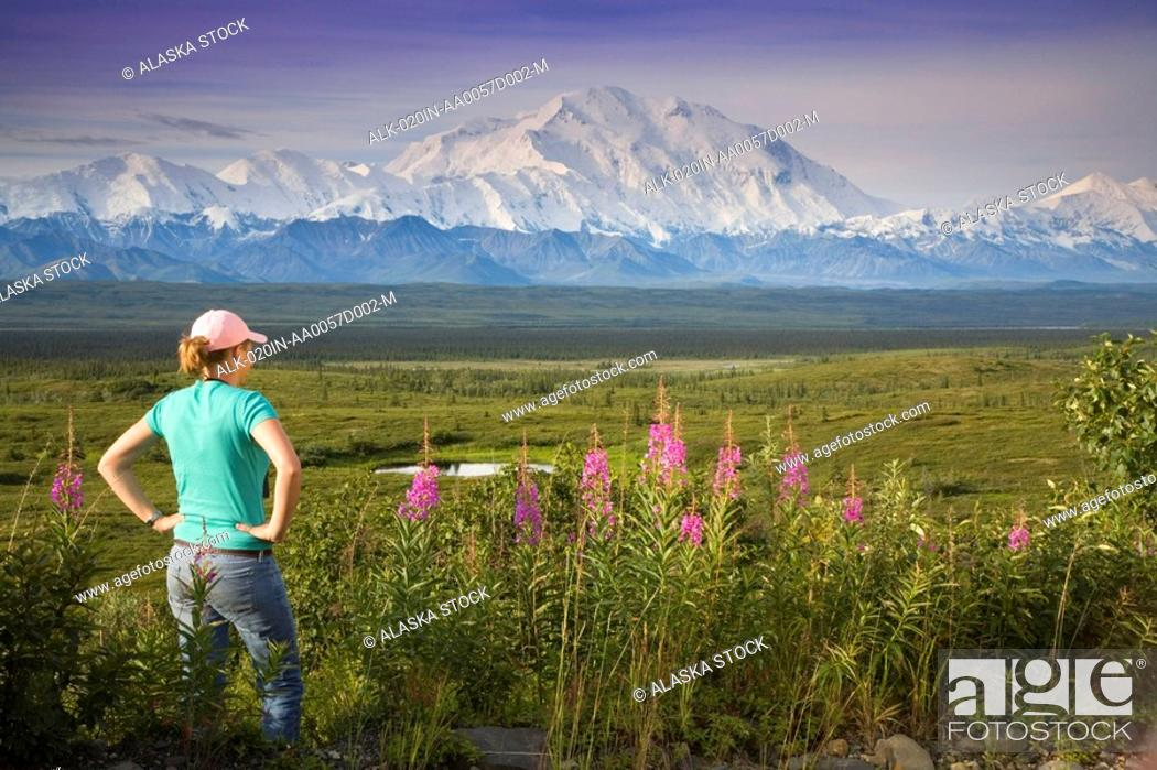 Stock Photo: Female visitor views Mt.Mckinley & Alaska Range through binoculars next to fireweed flowers Denali National Park Alaska.