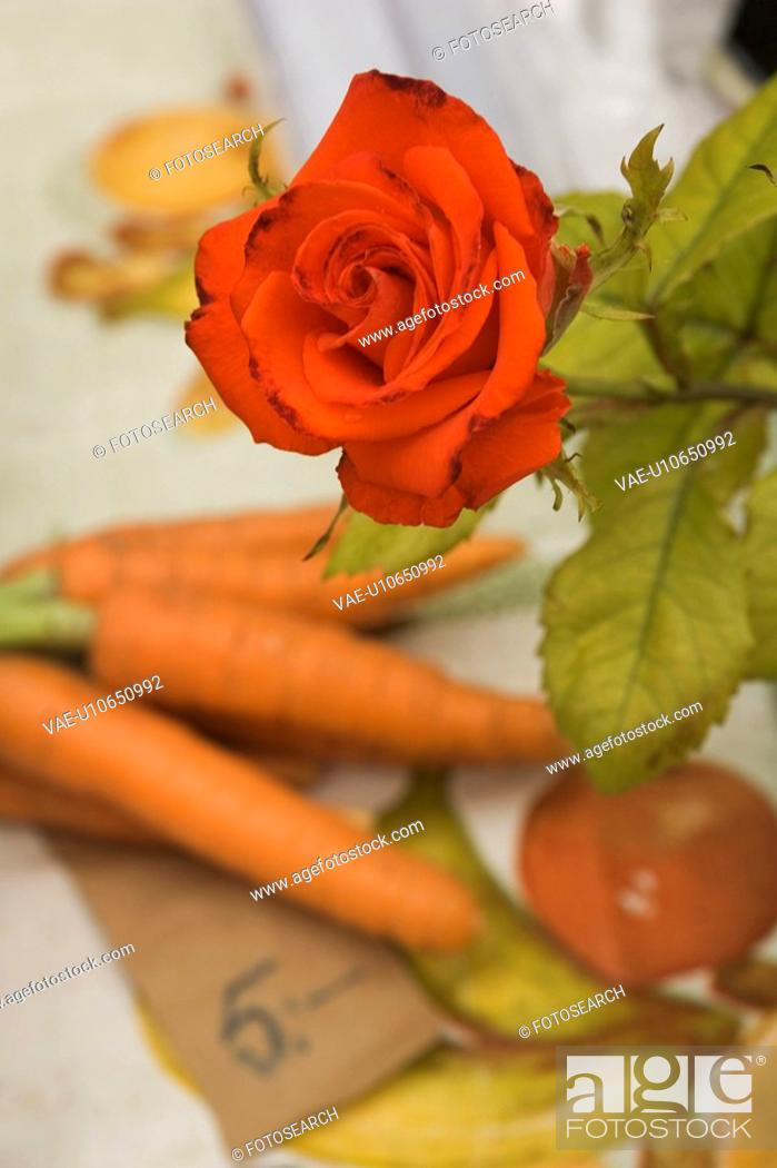 Stock Photo: Blooms, Close-Up, Eatables, Flower, Fresh.