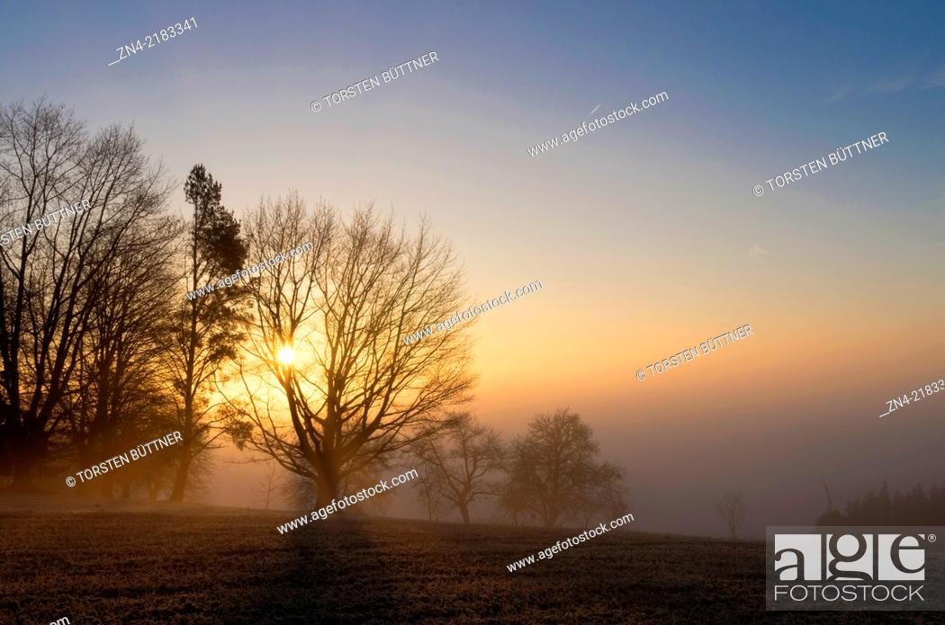 Stock Photo: Sun gazing through tree while sunrise on Magdalenaberg Hill in Bad Schallerbach. Austria.