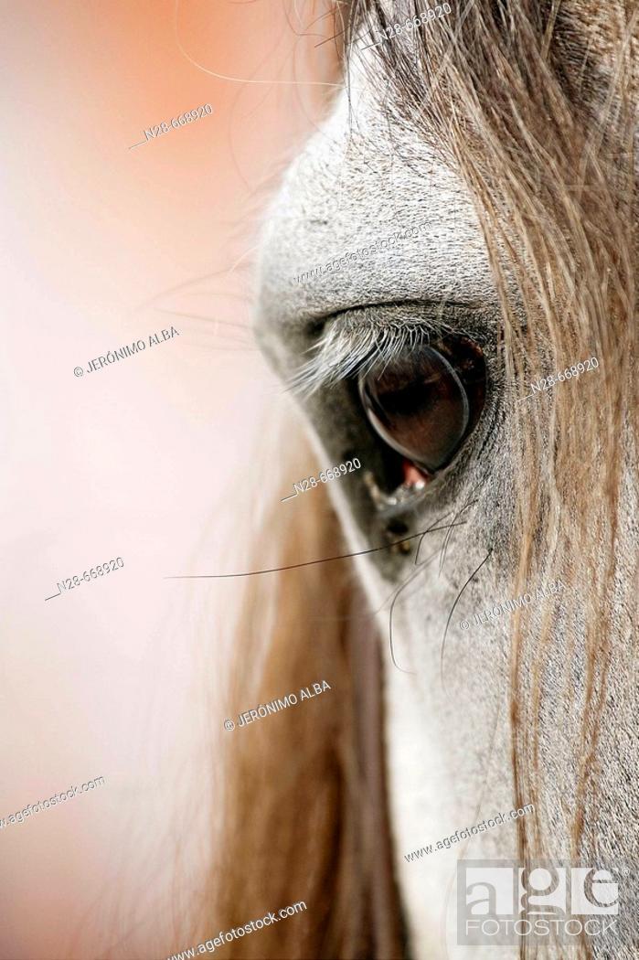 Imagen: Horse.