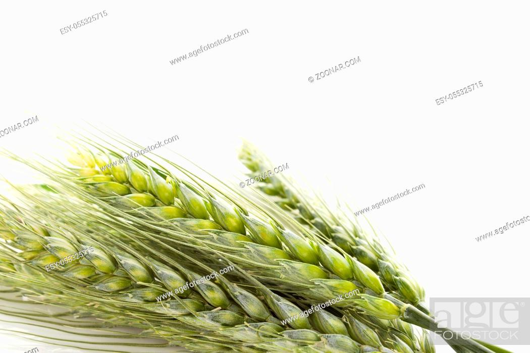 Stock Photo: Green fresh wheat isolated on white background.