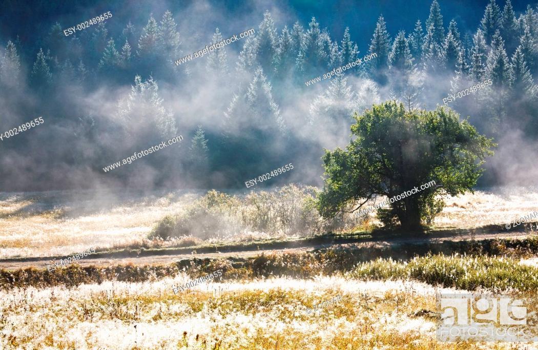 Stock Photo: Morning misty autumn mountain landscape.