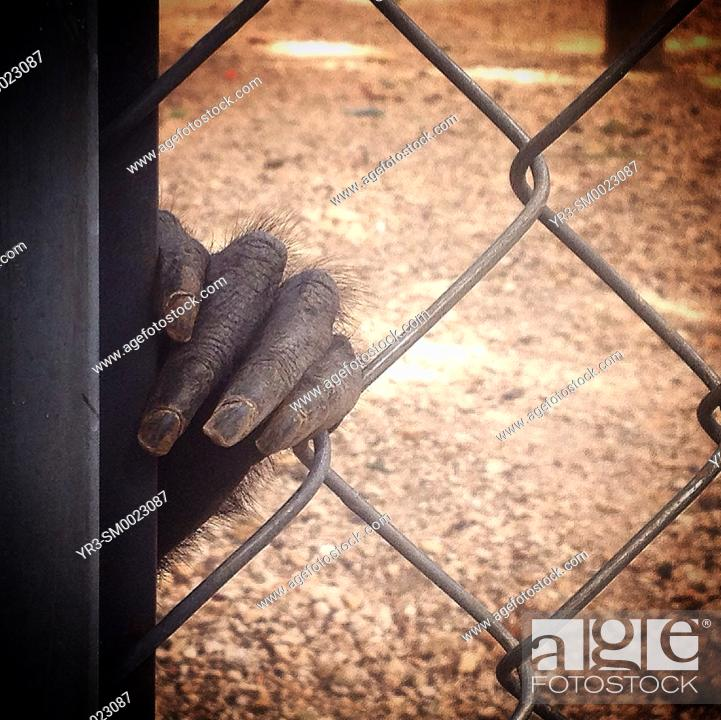 Imagen: The hand of a monkey in the Museo del Chocolate in Uxmal, Yucatan Peninsula, Mexico.