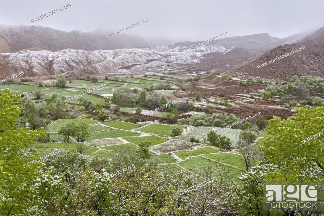 Stock Photo: surroundings of the village of Tighza under a thin layer of snow, Ounila River valley, Ouarzazate Province, region of Draa-Tafilalet, Morocco, North West Africa.