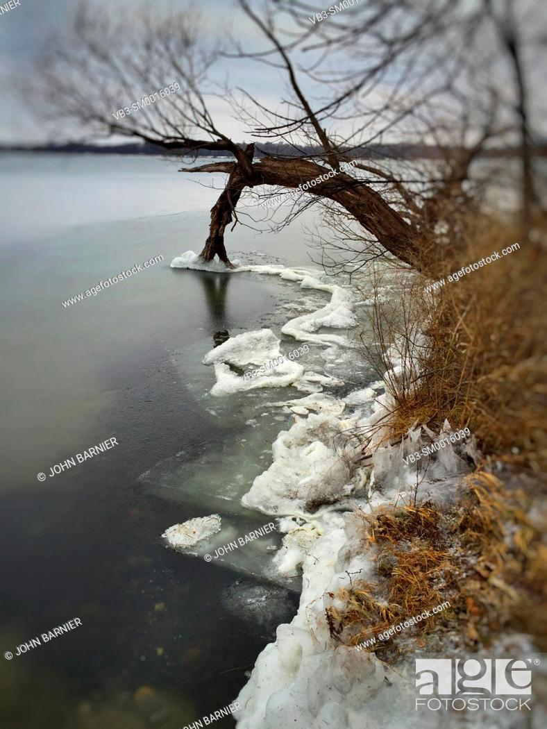 Stock Photo: Ice collecting on willow limbs dipping into Lake Harriet in Minneapolis.