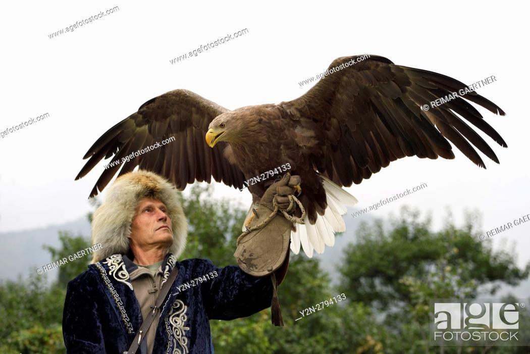 Stock Photo: Trainer holding a White Tailed Eagle up with spread wings at Sunkar Falcon Farm Almaty Kazakhstan.