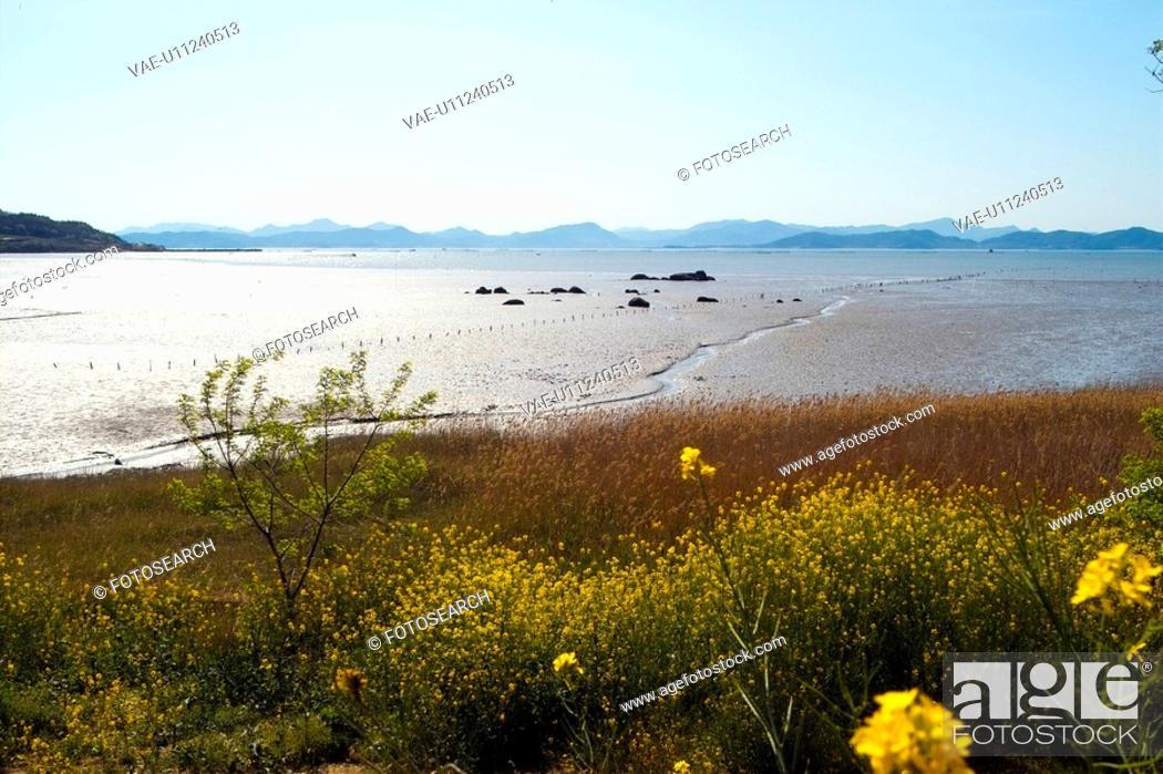 Stock Photo: plants, scenery, plant, flower, sea, flowers, nature.
