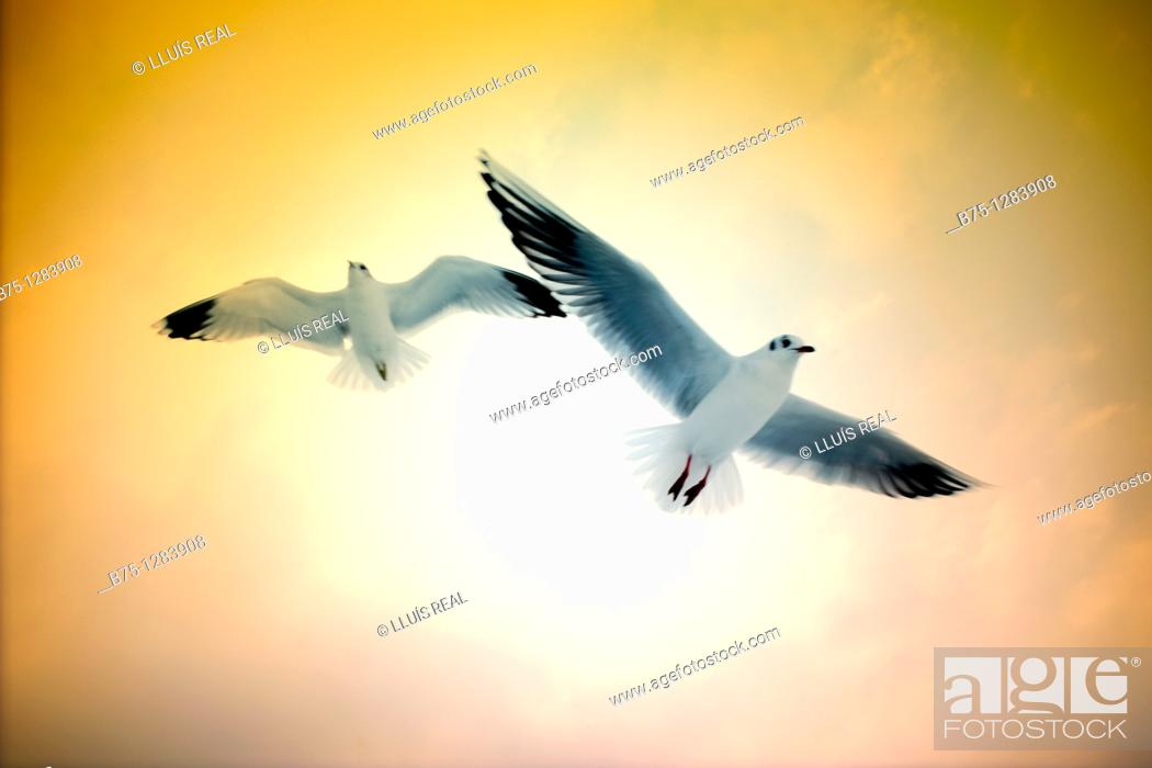 Stock Photo: flying seagulls.