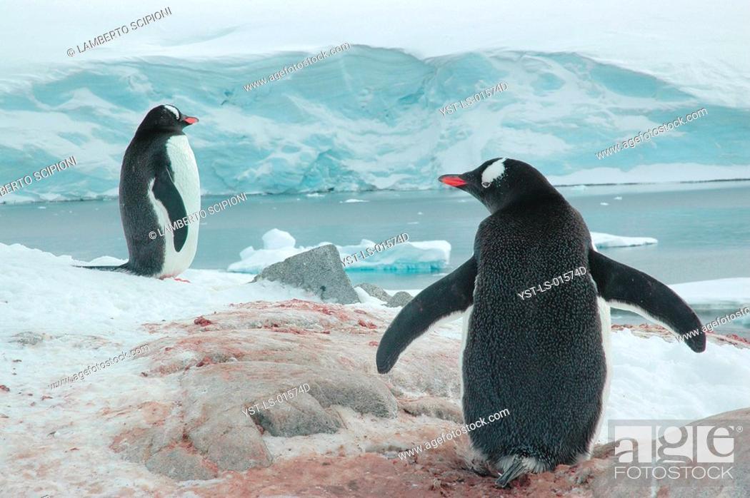 Imagen: Penguin, Iceberg, Glacier, Polar Desert, Lemaire, Antarctica.