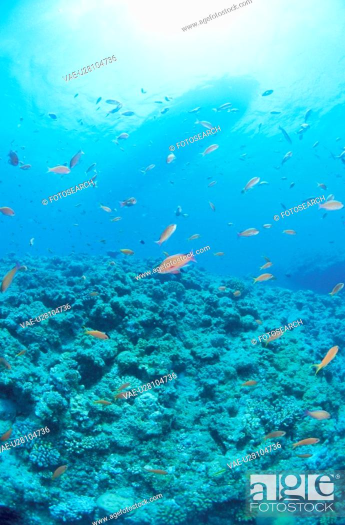 Stock Photo: Fish And A Coral Reef.